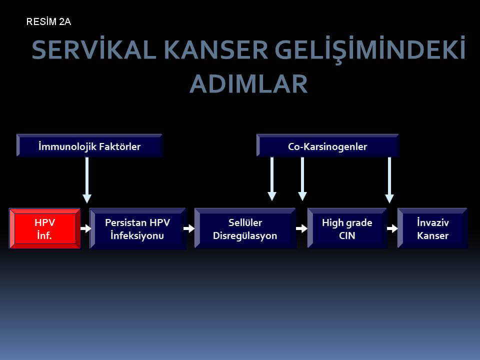 Rahim-ağzı-kanseri-ve-rahim-ağzı-kanseri-öcü-lezyonları-gelişiminde-basamaklar